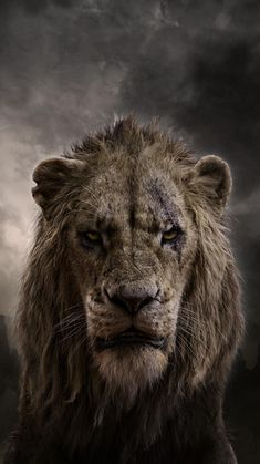 Watch Free The Lion King : Full Length Movies Simba Idolises His Father, King Mufasa, And Takes To Heart His Own Royal Destiny. Le Roi Lion 1, Le Roi Lion Film, Le Roi Lion Disney, Disney Lion King, Scar Lion King, Lion King Movie, Lion King Simba, Roi Lion Broadway, Live Action