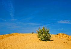 desert sky tree road tree shrub sand hill long outdoor natural far daylight cloud travel horizontal yellow dune #SergeyProFineArtPhotography #ArtForHome #FineArtPrints #InteriorDesign #Landscape #Nature