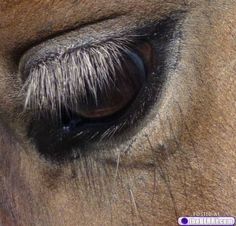 beautiful horses 11 But daddy I want a pony! Most Beautiful Animals, Beautiful Horses, Beautiful Creatures, Beautiful Soul, Cowboy Photography, All About Horses, All Gods Creatures, Baby Puppies, Horse Love