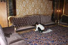 nightclub sofas - Google Search