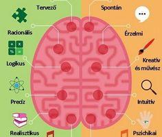 """Képtalálat a következőre: """"agyfélteke feladatai"""" Left Brain Right Brain, My Room, Knowledge, Teaching, Humor, Education, Health, Coloring, Health Care"""