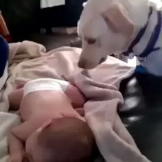Video via @123.amazingvideos ©No Copyright Intended-Footage belongs to their respected owners. Please email credits@seamusobrienpictures.com for crediting issues✉️