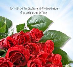 Versete de Aur : 01.11.2013 - 01.12.2013 Aur, Bible Verses, Plants, Scripture Verses, Plant, Bible Scripture Quotes, Bible Scriptures, Scriptures, Planets