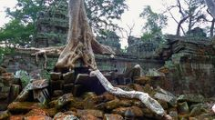 Ta Prohm,Siem Reap,Cambodia Archaeological Survey Of India, Ta Prohm, Modern Names, Siem Reap, Growing Tree, Angkor, Most Visited, Cambodia, Conservation