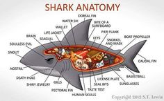 [funny] A Cartoon Guide To Shark Anatomy … Orcas, Cthulhu, Le Kraken, Save The Sharks, Shark Bait, Shark Shark, Wale, Great White Shark, Marine Biology