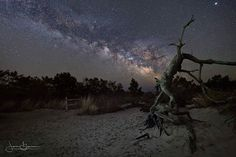 Twisted Milky Way  Sometimes those twisted and gnarled dead trees seem to come to life at night.  I'll never get tired of looking for new locations at night.  Half of the fun is hunting around using your mind's eye to create something.  Canon 6D Sigma 14mm F/1.8 Art F/2.2 ISO 3100 20 seconds Tripod - Feisol CT-3342 Ballhead - Acratech GP  ___________________________________  Prints available for purchase check my bio! Stop by JasonGambone.com for more photos and stories…