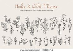 Herbs and Wild Flowers. Botany. Set. Vintage flowers. Black and white illustration in the style of engravings. - stock vector