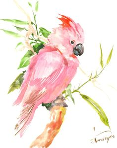Cockatoo Painting original watercolor painting 14 by ORIGINALONLY