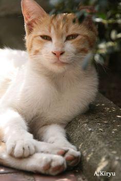 元東スポ記者の「I Love Cat」な毎日。<br> ナニワに生きる猫(おもに野良猫)との出会いを求めて大阪の街をウォーキングと自転車で回っています。<br> その出会いの物語を写真と文章で紹介していきます。<br><br> 2009年11月17日スタート