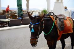 I want to ride the donkey! Mykonos, Greece 2013