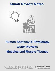 Muscles and Muschle Tissue Quick Review    #education #science #school #college #math #teacher #download #literature #studyaids