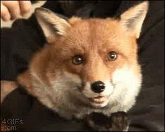 i look soooo foxy!