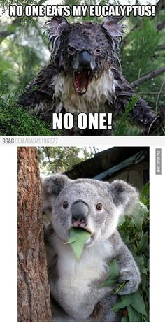 Two koalas. | 29 Things That Will Make You Grin Like An Idiot However Badly Your Day's Going