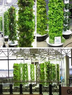 "Chicago Airport... Tower Garden provides produce to its restaurants!   Go to marycook.towergarden.com to learn how you can get one of your own! "" )"
