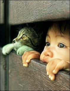 Cat & baby Boy Looking Through Fence