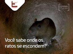 Blog do rato - Associação Brasileira de Franchising: CURIOSIDADES TSERV: VOCÊ SABE ONDE OS RATOS SE ESC...