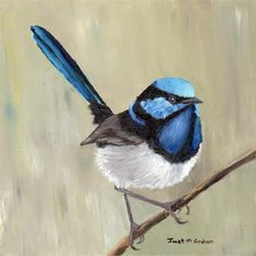 """Superb Fairy Wren"" - Original Fine Art for Sale - © Janet Graham"