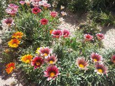 Fotografía. Las novias del Sol Plants, Sun, Brides, Pictures, Plant, Planets