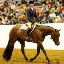 Hunter under saddle at the Congress