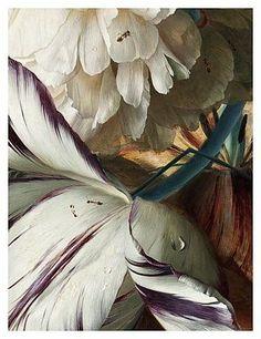 Jan Van Huysum Detail of Bouquet of Flowers in an Urn, 1724 (oil on canvas) Visual Elements Of Art, Elements Of Art Texture, Texture Art, Visual Texture, Composition Art, Wreath Drawing, Flower Wallpaper, Botanical Art, Art Oil