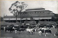 Morning Market.Taken circa 1905. Pietermaritzburg, Natal