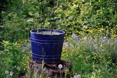 5 Plants You Can Grow in Buckets | Grow Your Own Organic Garden, Even if You Don't Have a Yard! by Survival Life at http://survivallife.com/plants-you-can-grow-in-buckets/