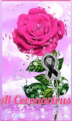 3d Animation Wallpaper, Iphone Wallpaper Video, Flower Wallpaper, Good Night Flowers, Good Morning Images Flowers, Beautiful Love Pictures, Love You Images, Beautiful Flowers Wallpapers, Beautiful Rose Flowers