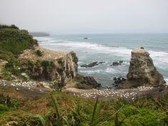 #Viaggi dentro e fuori dalla testa #nuovazelanda muriwai beach #postidasogno