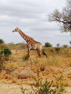 Imagem: Vilma Ziderich África do Sul