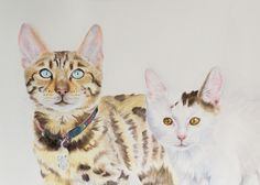 Watercolour portrait of bengal cat called Merlin and bengal x ragdoll cat called Rosie.