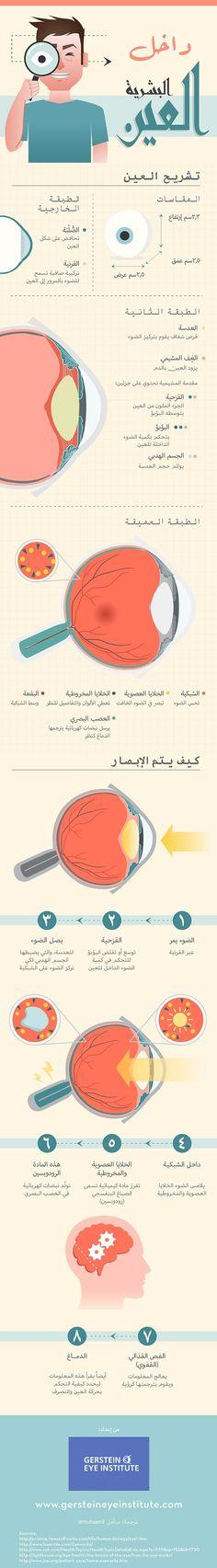 انفوجرافيك عربي - داخل العين البشرية #انفوجرافيك #عربي #العين #infographic #arabic #Eye