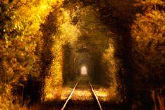 "Autumn tunnel of Love - <a href=""https://www.facebook.com/PawelUchorczakFotografia"">LIKE ME ON FACEBOOK </a>"