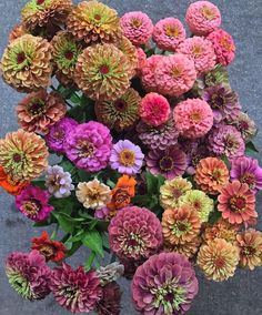 Discover recipes, home ideas, style inspiration and other ideas to try. Mason Jar Flower Arrangements, Mason Jar Flowers, Mason Jars, Cut Flower Garden, Flower Farm, Zinnia Bouquet, Plant Therapy, Zinnias, Growing Plants