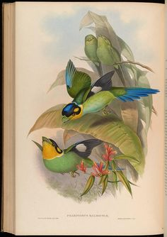 n279_w1150 by BioDivLibrary, via Flickr