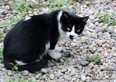 gatito de ojos verdes