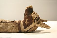 'All animal species mummified by the ancient Egyptians were deemed to have close associations with gods, mainly because of characteristics they were seen to share with the deities, or through their appearance at significant sites,' she explained. Jackals (pictured) were associated with Anubis, the god of embalming