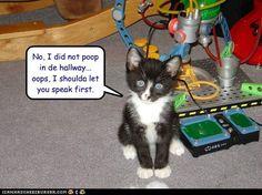 No, I did not poop in de hallway...  oops, I shoulda let you speak first.