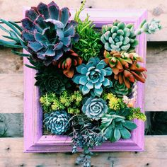 in love with succulents! Picture Framed Vertical Succulent Garden by Succulent Wonderland