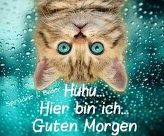 tomorrow, all already awake - ♡ Guten Morgen ♡ Good Morning ♡ - Perros Cute Kittens, Cats And Kittens, Animals And Pets, Baby Animals, Funny Animals, Cute Animals, I Love Cats, Crazy Cats, Beautiful Cats