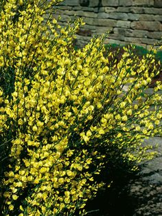 When your garden needs immediate intervention, here are some go-to plant choices.