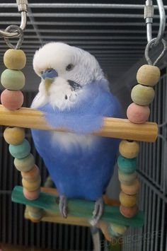 Check this out - Parakeets As Pets xx Monk Parakeet, Budgie Parakeet, Cockatiel, Budgies, Cute Birds, Pretty Birds, Beautiful Birds, Color Limon, Animals And Pets