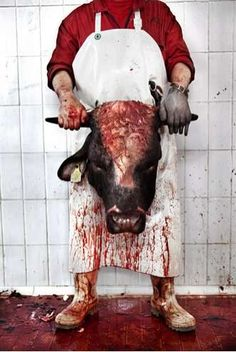 ITS 2014 STOP EATING ANIMALS!!!