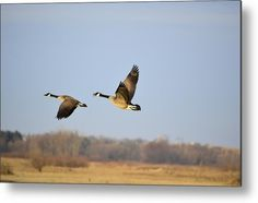 Springing To Flight Metal Print by Bonfire #Photography