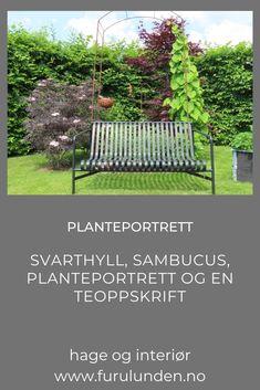 "Et gammelt ordtak sier at ""der man har hyll, honning og kål, blir doktoren en fattig mann!"" Svarthyll –sambucus N. 'Black lace'- med røde (nesten svarte) flikete blader. Jeg er betatt. Les mer om Svarthyll i min artikkel her. #svarthyll #sambucus #hagetips #planteportrett #hageinspirasjon #trädgårdsinspiration #haveinspiration Porch Swing, Outdoor Furniture, Outdoor Decor, Portrait, Plants, Juice, Headshot Photography, Porch Swings, Portrait Paintings"