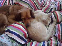 Canelo sharing bed with Allegro | Animals Zone
