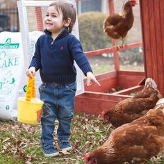 Modern Farmer | Love Chickens But Hate Commitment? Try Renting