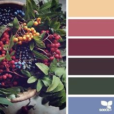 SnapWidget | today's inspiration image for { color picks } is by @_ewabakrac ... thank you Ewa for another *incredible* #SeedsColor photo share!