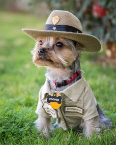 "A small Yorkshire terrier sits in grass wearing a ""park ranger uniform"" for dogs, including a hat. I Love Dogs, Cute Dogs, Cute Dog Toys, Yorky Terrier, Chien Yorkshire Terrier, Top Dog Breeds, Funny Animals, Cute Animals, Lap Dogs"