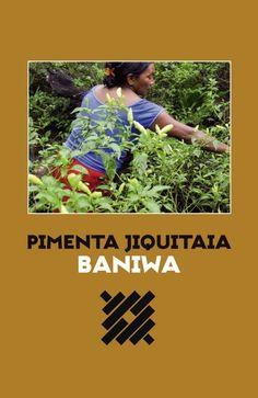 | out.2016 | Vira livro a história do cultivo feito exclusivamente pelas mulheres, dos usos do fruto na culinária e nos rituais dos índios Baniwa e, recentemente, da comercialização e conquistas no cenário gastronômico brasileiro.