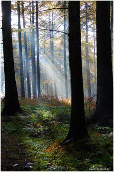 #bos #herfst #natuur